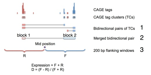 Identification of bidirectionally transcribed loci